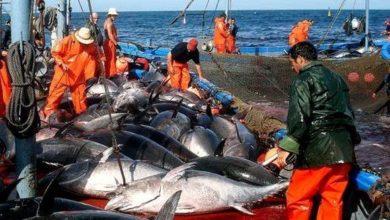 صورة 1.650 طن حصة الجزائر من التونة في 2020