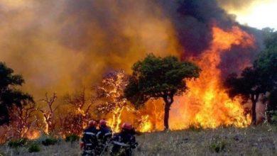 صورة توقيف متورطين في حرائق الغابات بالطارف
