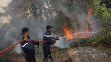صورة النيران تلتهم 8778 هكتارا من الغابات خلال شهرين فقط