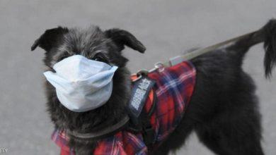 صورة إصابة الكلاب بفيروس كورونا.. الأردن تسجل أول إصابة
