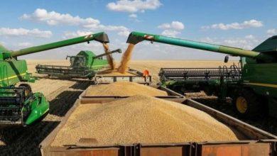 صورة الجزائر تعدل بنود المناقصات الدولية لشراء القمح