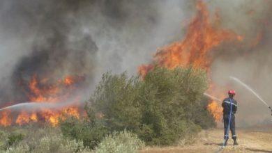 صورة إيقاف 5 أشخاص مشتبه بهم في قضية إضرام حرائق غابات واد قوسين ولاية الشلف