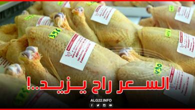 صورة 460 دج .. سعر الكيلوغرام الواحد من الدجاج في أسواق العاصمة