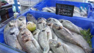 صورة بلوط لـ ALG22: كل الحلول موجودة لتوفير الأسماك بسعر مناسب ولكن التطبيق غائب تماما